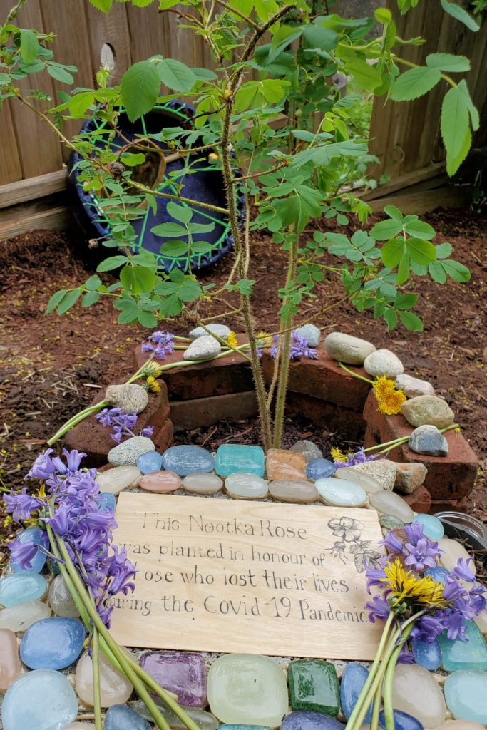 """A plaque covered in stones with the text: """"This Nootka rose was planted in honour of those who lost their lives during the COVID-19 pandemic."""" Purple flowers rest on top of the plaque. Behind it is a newly planted rose bush."""